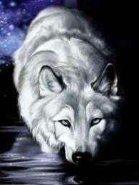 Set Wolf