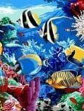 Set Fish