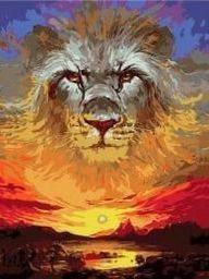 set lion - sunset