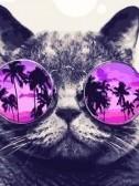 kat met bril