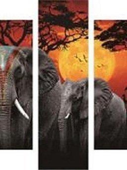 olifanten met zon