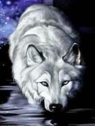 Witte wolf aan het water